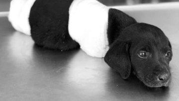 Sakarya Valisi'nden bacakları kesilen köpekle ilgili yeni...