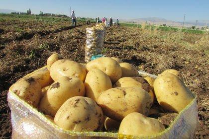 Maliyet arttı, ekim alanı azaldı, patates fiyat...
