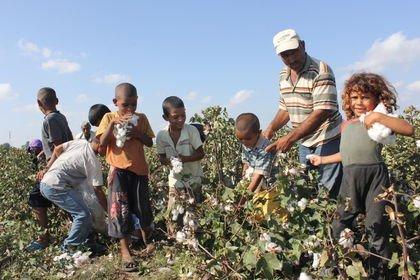 FAO uyardı: Tarımda çocuk işçi sayısı artıyor