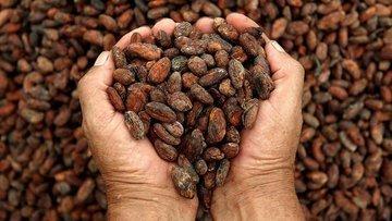 Kakao fiyatları gram altınla yarışıyor