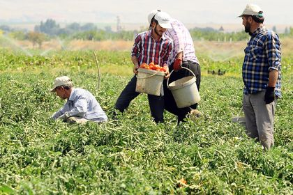 Köylerde birlikte üretime ilave destek