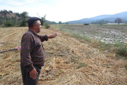 TARSİM çiftçiye 151 milyon TL ödeyecek