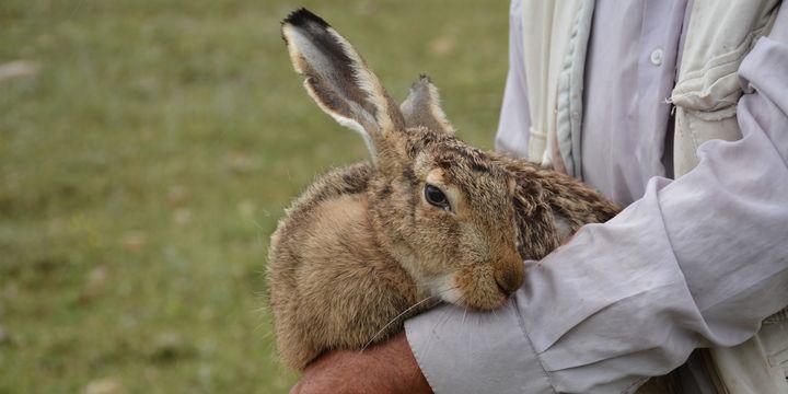Kaçak tavşan avcısının traktörüne el konuldu