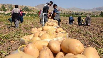 Patates fiyatında son durum