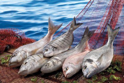 FAO'dan çarpıcı soru: Dünya balıkçılıkta en iyi...