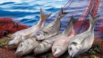 FAO'dan çarpıcı soru: Dünya balıkçılıkta en iyi yıllarını...