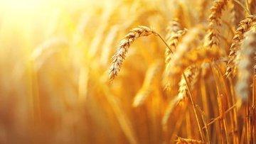Tarım ÜFE Haziran'da arttı