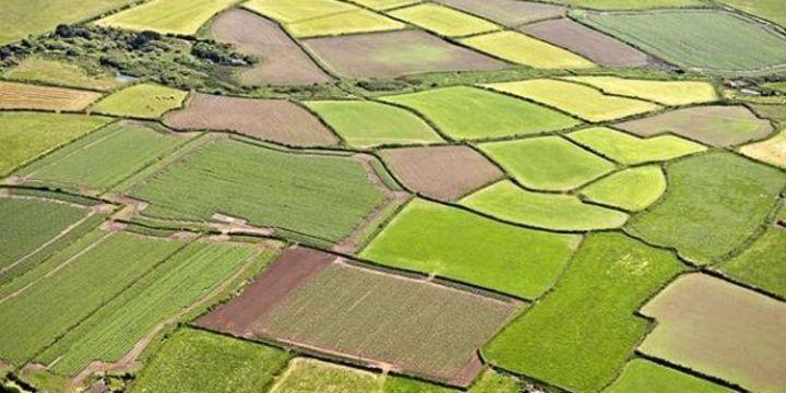 Tarımsal üretim seracılığa kayıyor